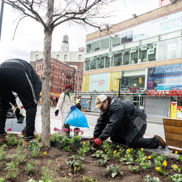 March 31, 2020: Joseph and Will, employees of the Horticultural Society of New York, planting flowers at Roberto Clemente Plaza while a bottle recycler looks on, East 149th Street at Third Avenue, Bronx, New York. © Camilo José Vergara